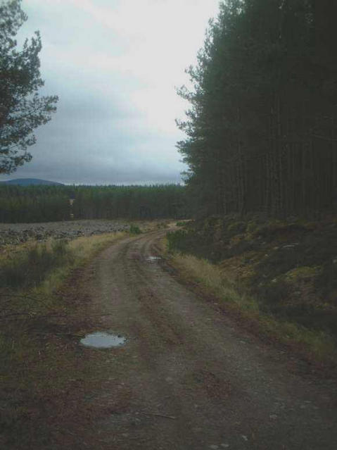 The track through Inshriach Forest
