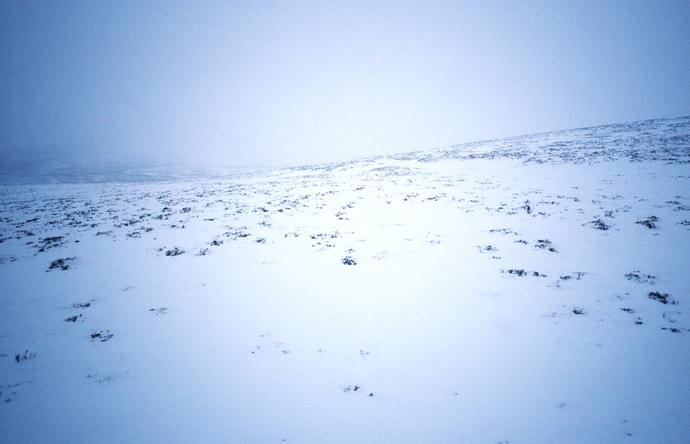 The spot. Snow covered heather.