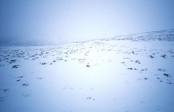 #1: The spot. Snow covered heather.