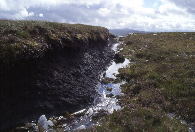 peat canyon