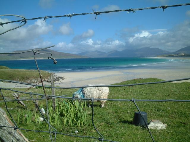 just another beach.....and sheep