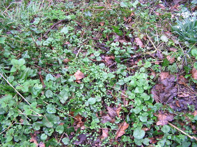 Ground cover at the confluence site in northern Wales.