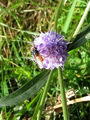 #8: A purple flower with a fly found in the meadow.