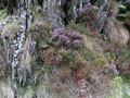 #9: Wild flowers, heather and ferns growing in the rocks along the grassy path beyond the confluence.