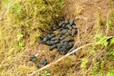 #7: Black bear bed on route to confluence