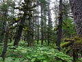#7: Mossy forest