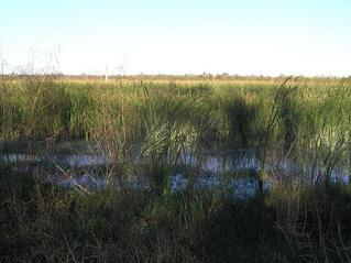 #1: View to the northeast at the marshy confluence from the nearest road.
