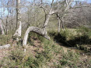 #1: 34N 087W sits just west of the Lilia Kerski Tree near the confluence of the eastern and northern tributaries of Coon Creek.
