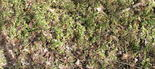 #9: Mid-winter ground cover.