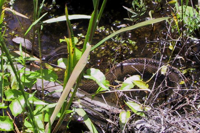 Cottonmouth which guards the approach from the east.