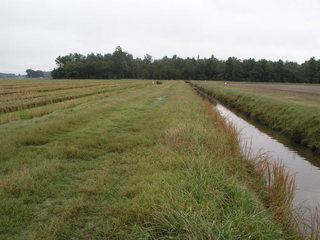 #1: 35N 91W sits on the edge of a drainage ditch in the middle of farm country.