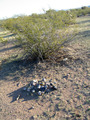 #7: Existing cairn at confluence site