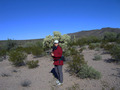 #8: Enroute next to a cholla cactus