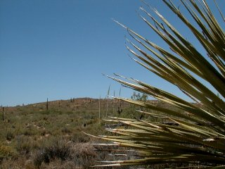 #1: Looking east toward the confluence, which is to the left of the yucca plant
