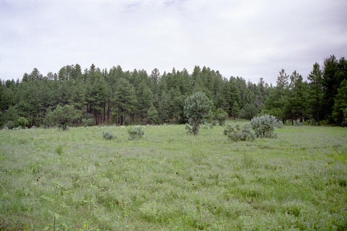 Meadow passed along way in forest