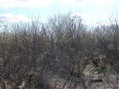 #4: View South (of the thicket where the confluence point lies)