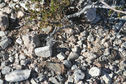 #5: ground cover