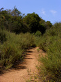#3: Trail leading to the confluence