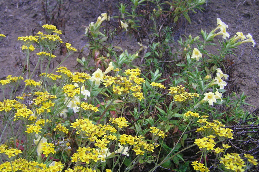 Wildflowers at the confluence site.
