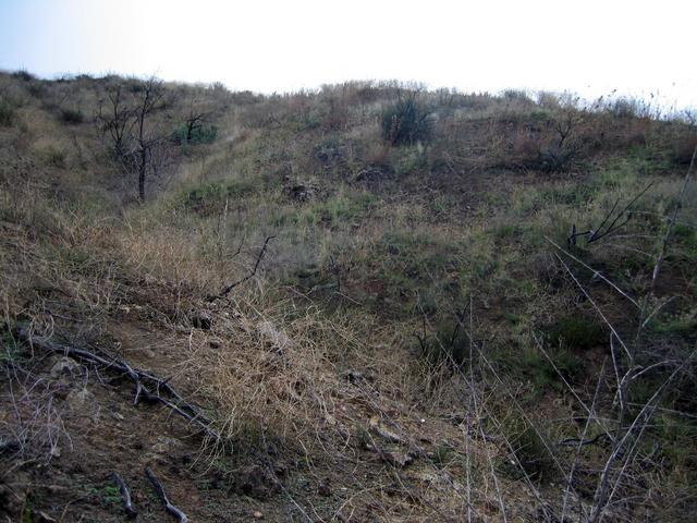 View south up the side of the ravine