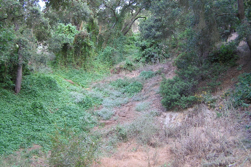The steep, loose, and thorny slope up to the confluence, looking west about 100 meters east of the confluence point.