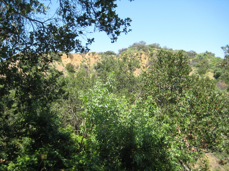 a view from confluence location looking west
