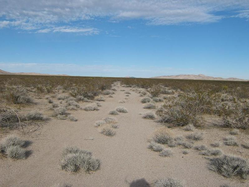 The scant desert track that goes nearest the confluence