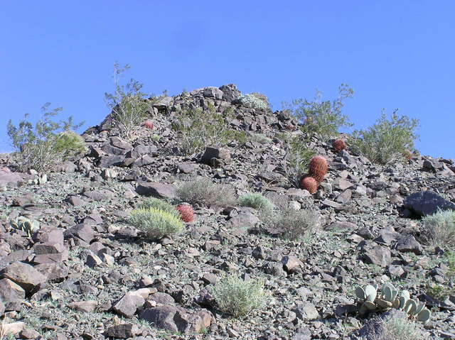 View east (up a nearby hill, showing several cactus)