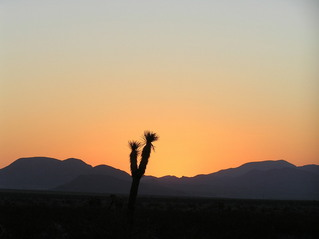 #1: Joshua Tree sunrise at the confluence of 35 North 117 West in the magnificent Mojave Desert.