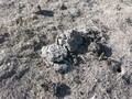 #7: cow dung marking the CP