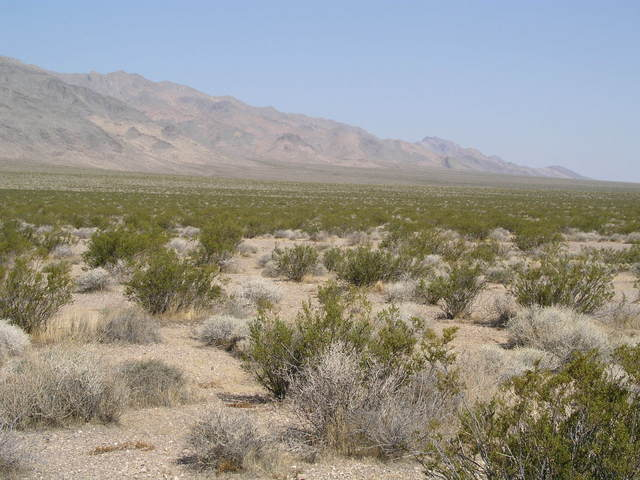 Looking northwest to the Nopah Range.