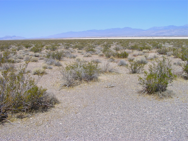 View North (across a dry lake bed, towards Pahrump)