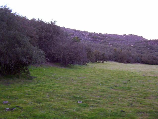 Looking north from the nearby clearing.