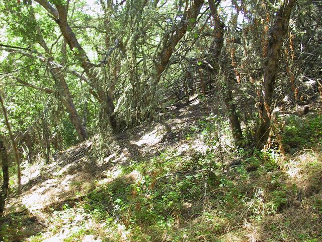 Picture of the confluence.  I got all zeros just past the patch of Poison Oak in the foreground.