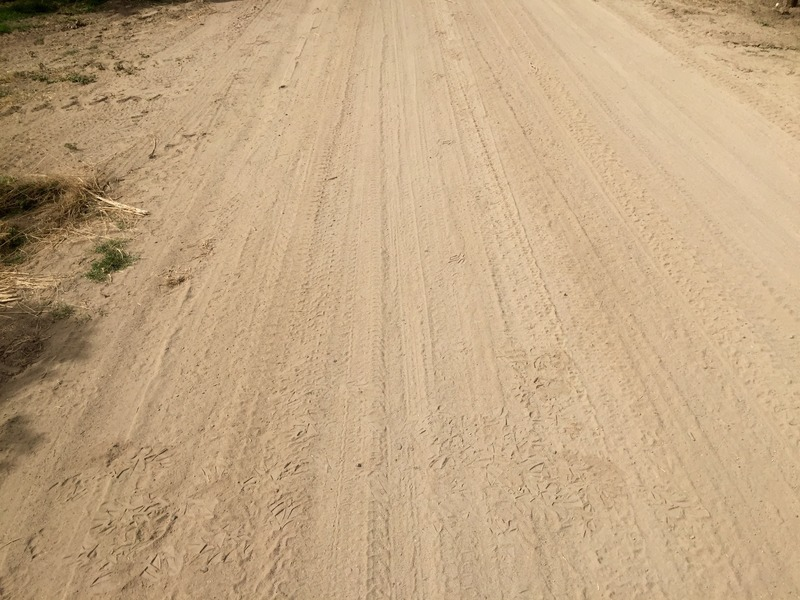 The confluence point lies on this dirt driveway, in an almond plantation