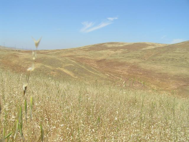"""The golden rolling hills of California"" --Folk Singer Kate Wolf.  View to the north from 37 North 121 West."