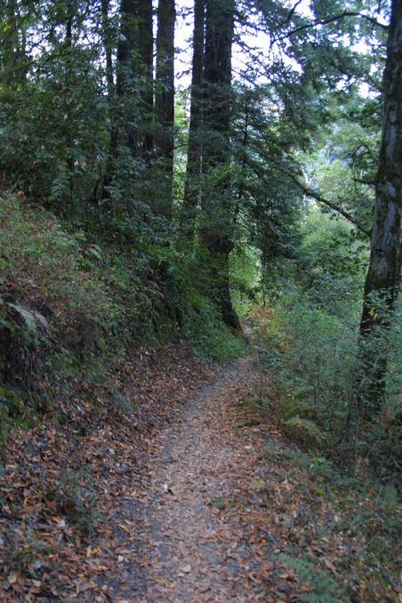The Confluence is on this trail near the Redwoods on the left.