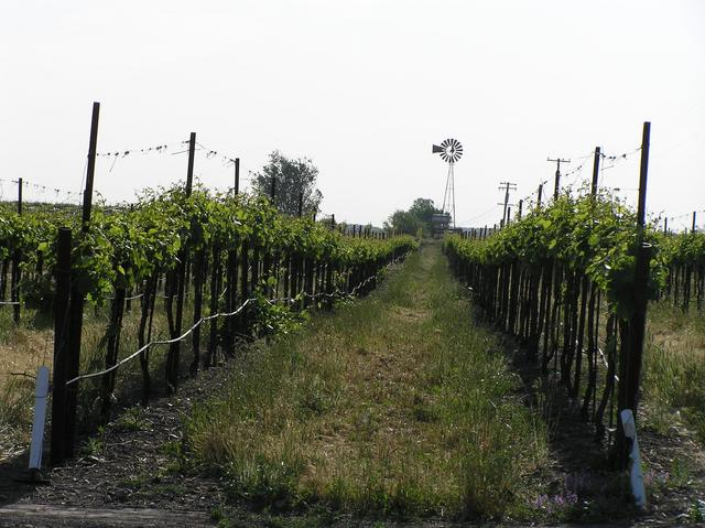 Vineyard 6 kilometers south of the confluence.