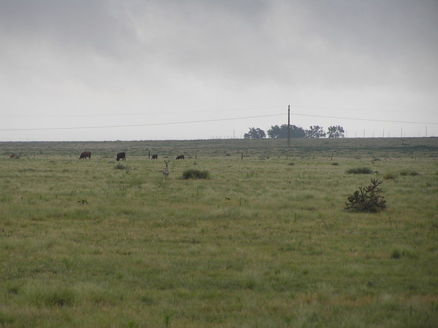 Deer and cattle in this view from the confluence to the northeast.