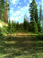 #8: Logging road enroute to confluence