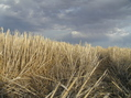#2: Stalks and sky:  View to the east.  Beautiful place.