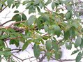 #6: Mountain laurel, the only greenery around