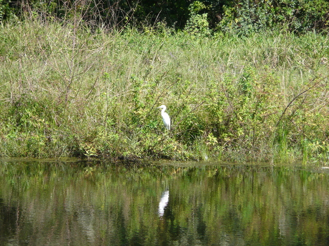 Egret near confluence