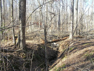 #1: Site of 33 North 84 West.  The confluence is just to the right of the log spanning the ravine.