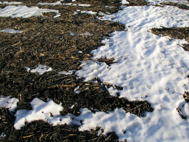 Groundcover:  old snow on a dormant cornfield.