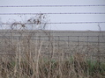 #8: Moody image of nearest fence to the confluence; 15 meters south of the confluence.