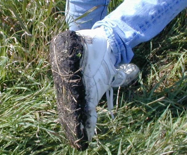 The moist, black Iowa soil clung stubbornly to shoes.