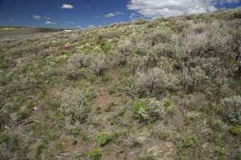 #1: The confluence point lies on a sagebrush-covered hillside