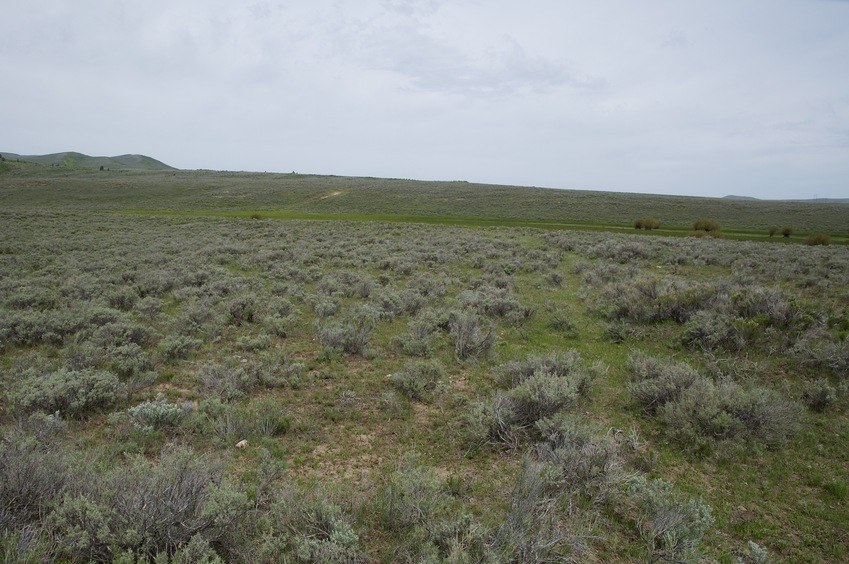 The confluence point lies atop an old road cut, in sagebrush.  (This is also a view to the North.)