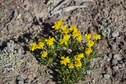 #8: Wildflowers growing near the confluence point